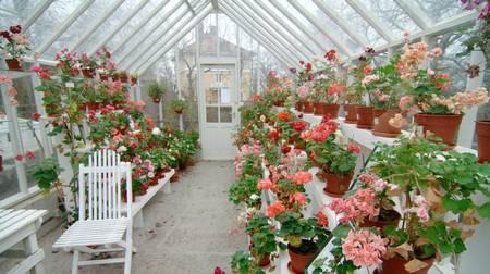 Фото теплиц с цветами